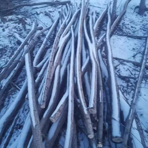 2米3米柳树支架杆